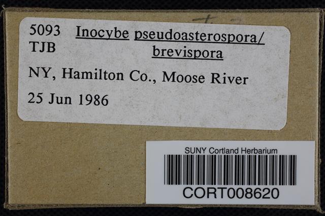 Image of Inocybe pseudoasterospora