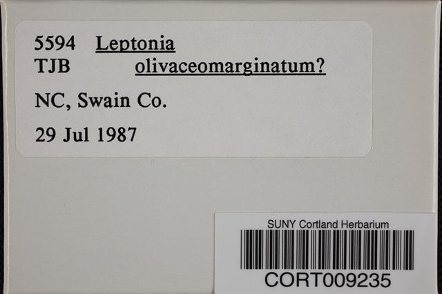 Image of Leptonia olivaceomarginata