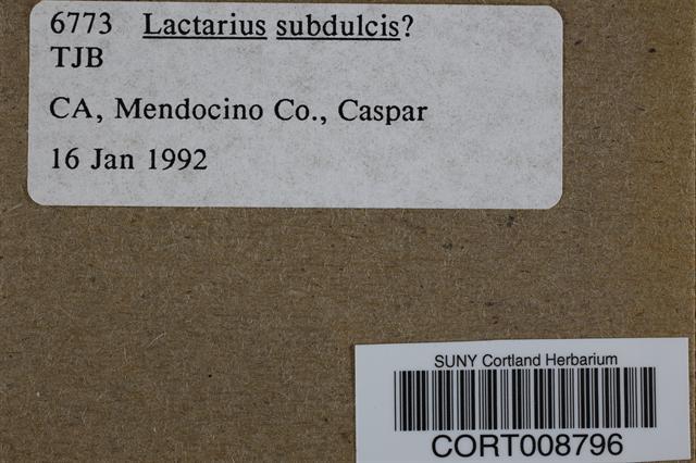 Lactarius subdulcis image