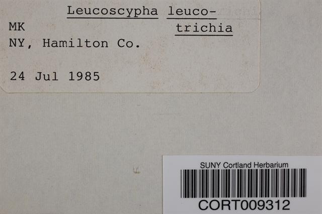 Leucoscypha image
