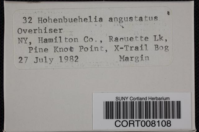 Hohenbuehelia angustata image