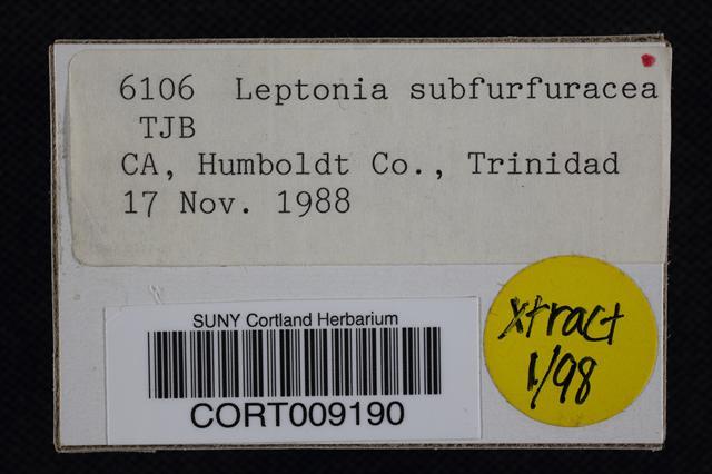 Image of Leptonia subfurfuracea