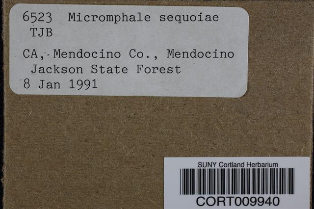 Image of Micromphale sequoiae