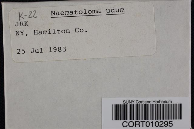 Hypholoma udum image