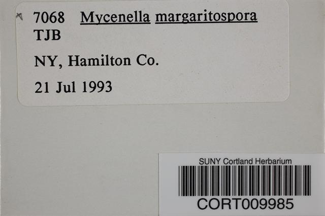 Mycenella margaritispora image