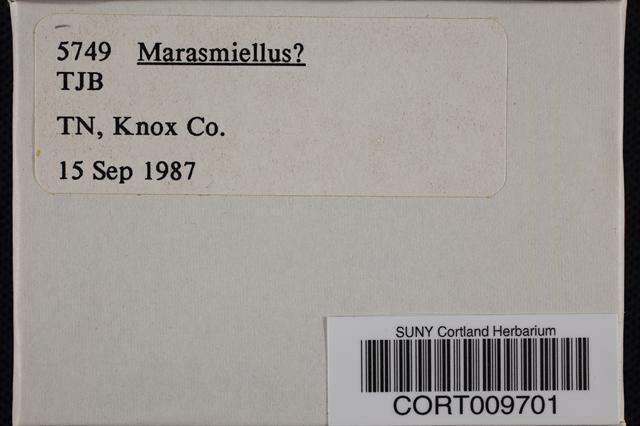 Image of Marasmius palmivorus