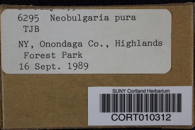 Neobulgaria pura image