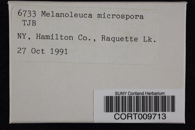 Melanoleuca microspora image