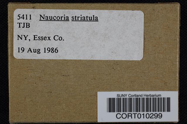 Naucoria striatula image