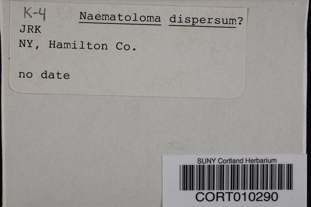 Hypholoma dispersum image