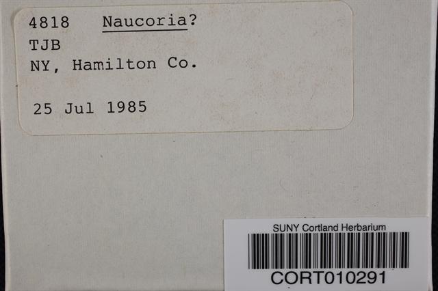 Naucoria image