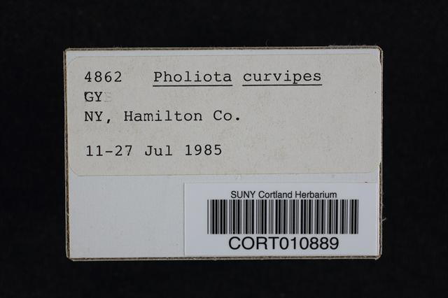 Pholiota tuberculosa image