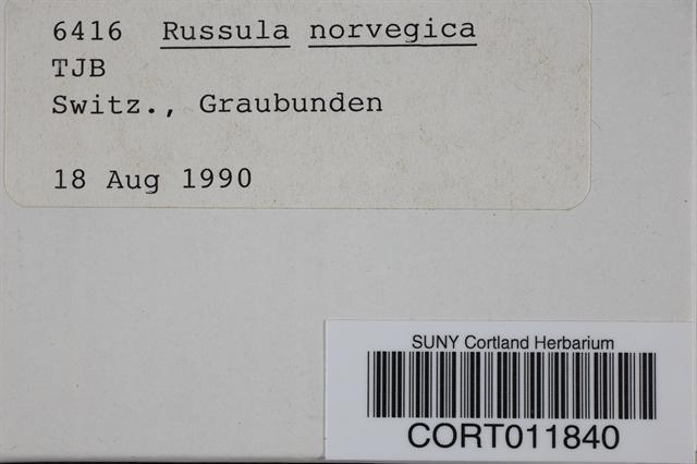 Image of Russula norvegica
