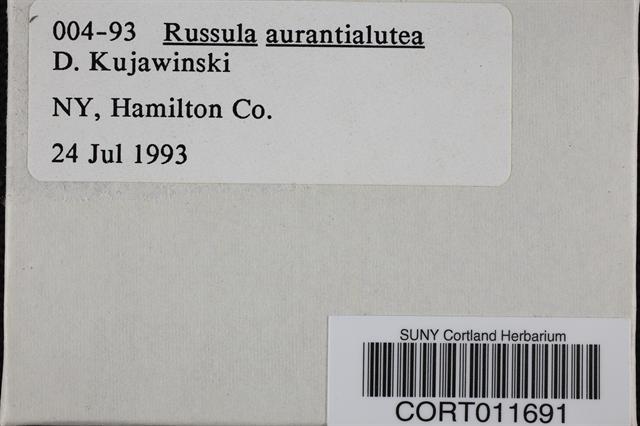 Russula aurantiolutea image