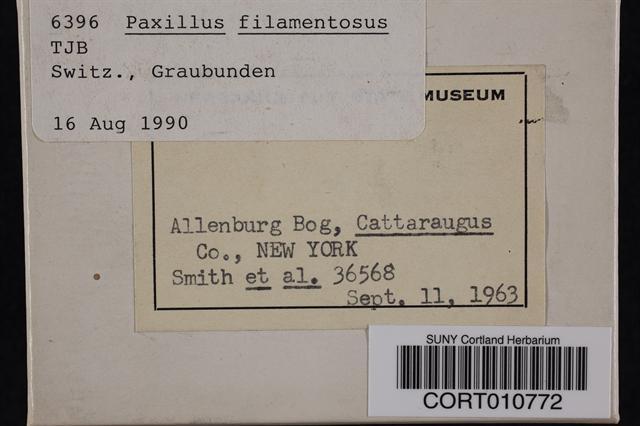 Paxillus filamentosus image