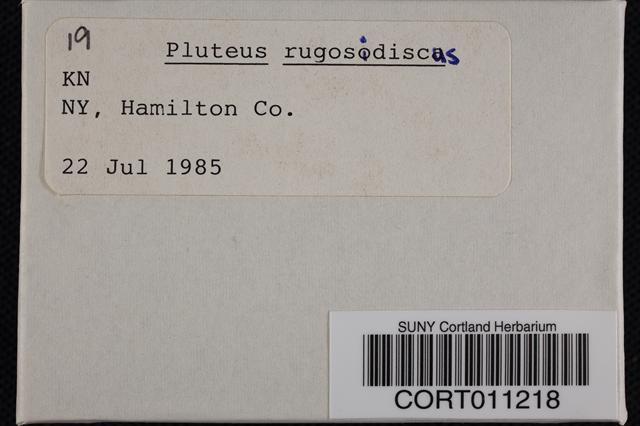 Pluteus rugosidiscus image