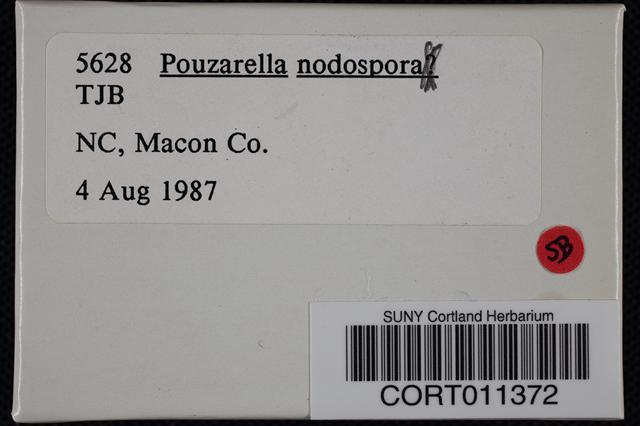 Pouzarella nodospora image