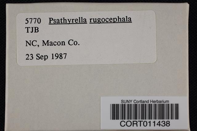 Psathyrella rugocephala image