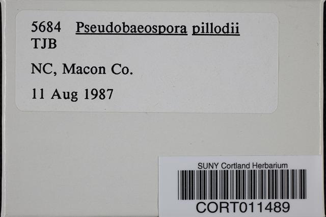 Pseudobaeospora pillodii image