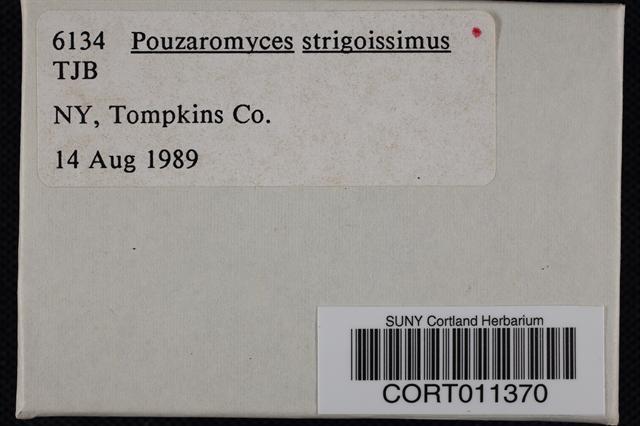 Image of Entoloma strigosissimum