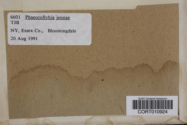 Phaeocollybia jennyae image