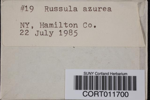 Russula azurea image