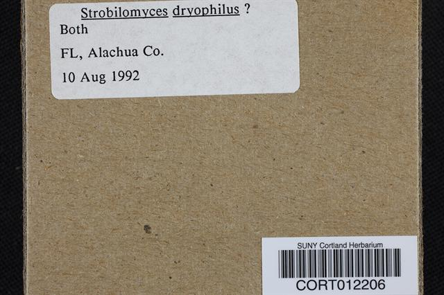 Strobilomyces dryophilus image
