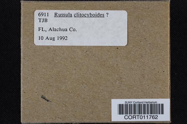 Image of Russula clitocyboides