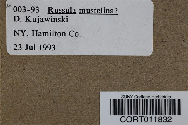 Russula mustelina image