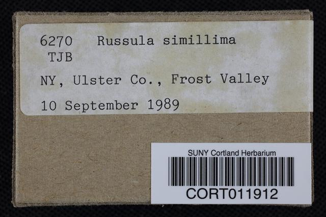 Russula simillima image