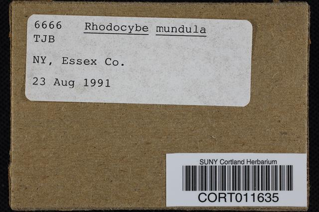 Rhodocybe popinalis image