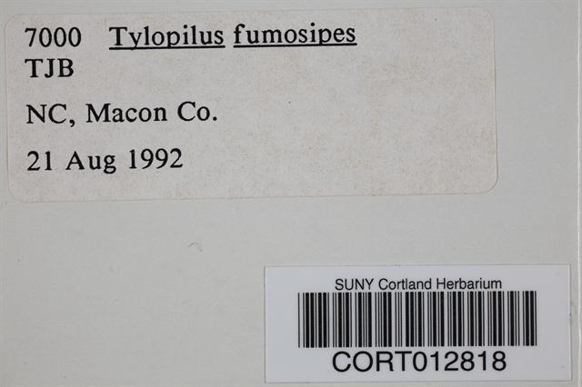 Tylopilus fumosipes image