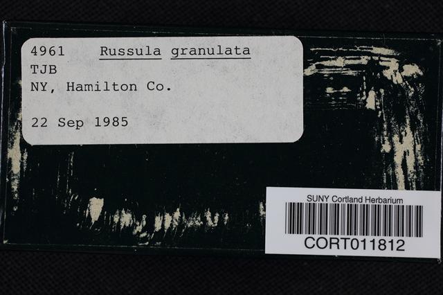 Russula granulata image