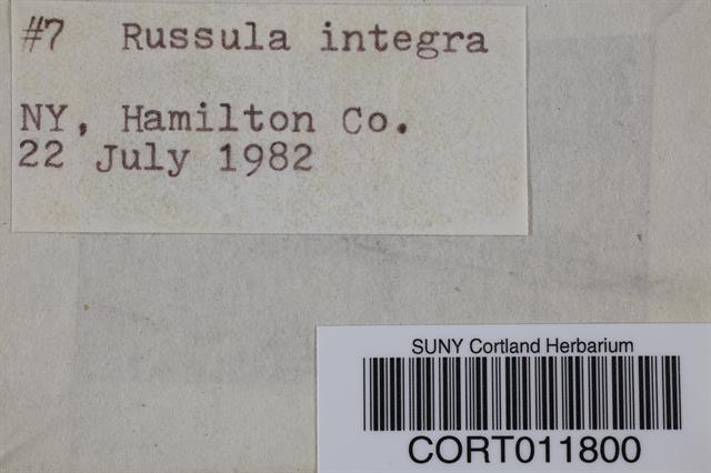 Russula integra image
