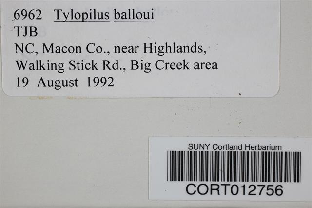 Image of Boletus balloui