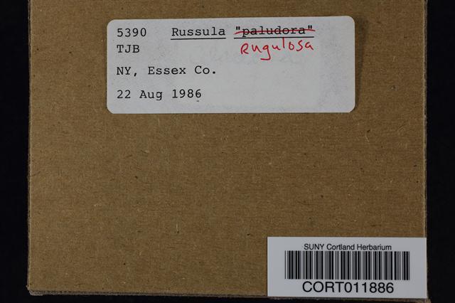 Russula rugulosa image