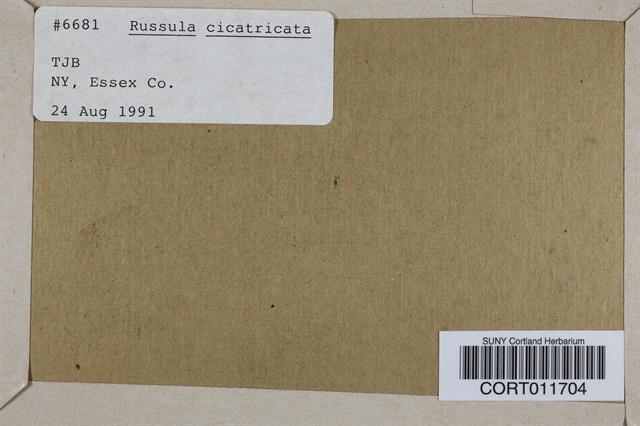 Russula cicatricata image