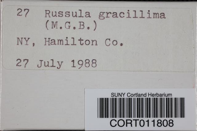 Russula gracillima image