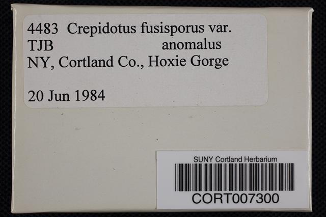Crepidotus fusisporus image