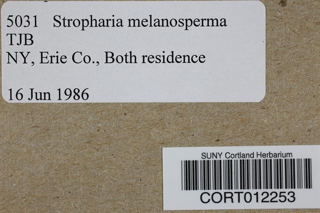 Stropharia melanosperma image