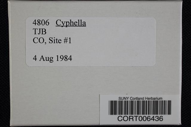 Cyphella image
