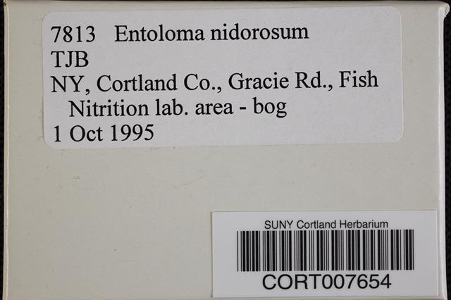 Entoloma nidorosum image