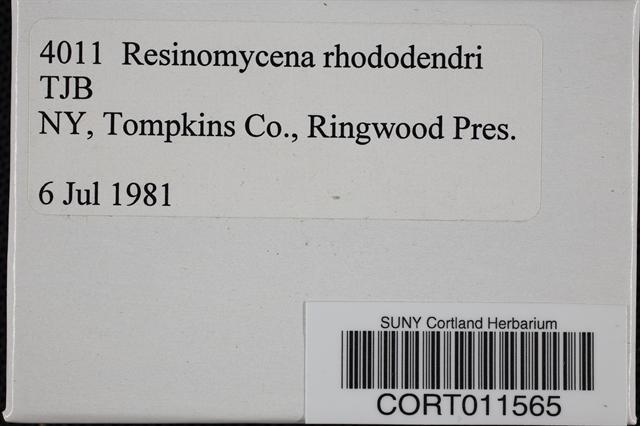 Image of Agaricus rhododendri
