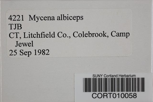 Mycena albiceps image