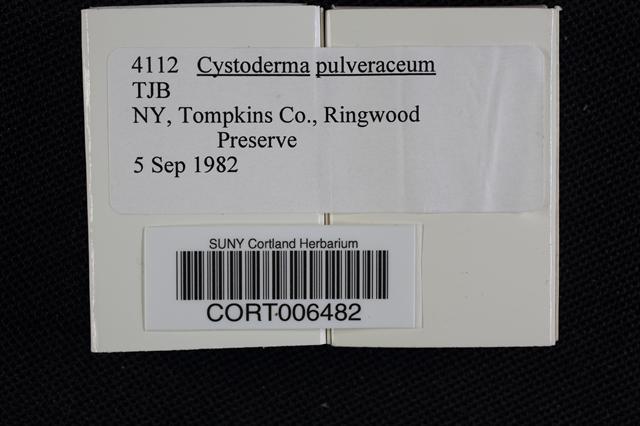 Image of Cystoderma pulveraceum