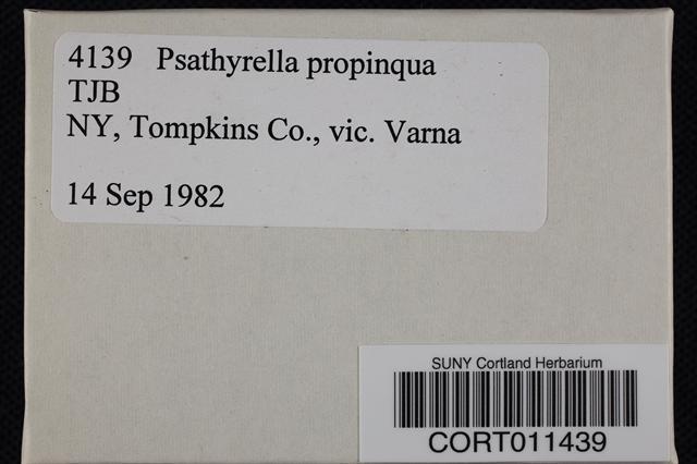 Image of Psathyrella propinqua