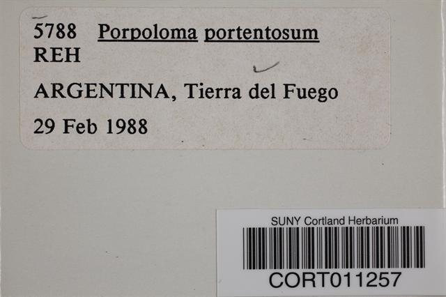 Porpoloma portentosum image