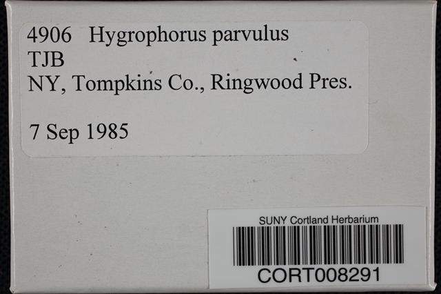 Image of Hygrophorus parvulus