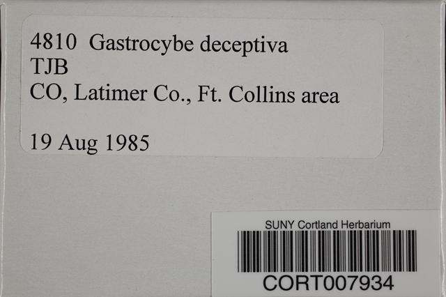 Image of Gastrocybe deceptiva