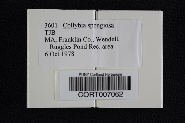 Collybia spongiosa image